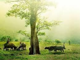 Phân tích 9 câu thơ đầu bài đất nước của Nguyễn Khoa Điềm